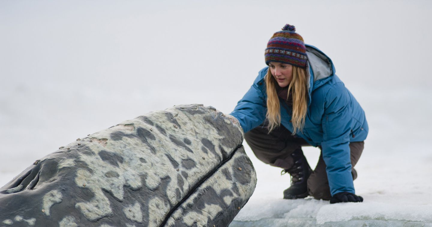 An image from Big Miracle