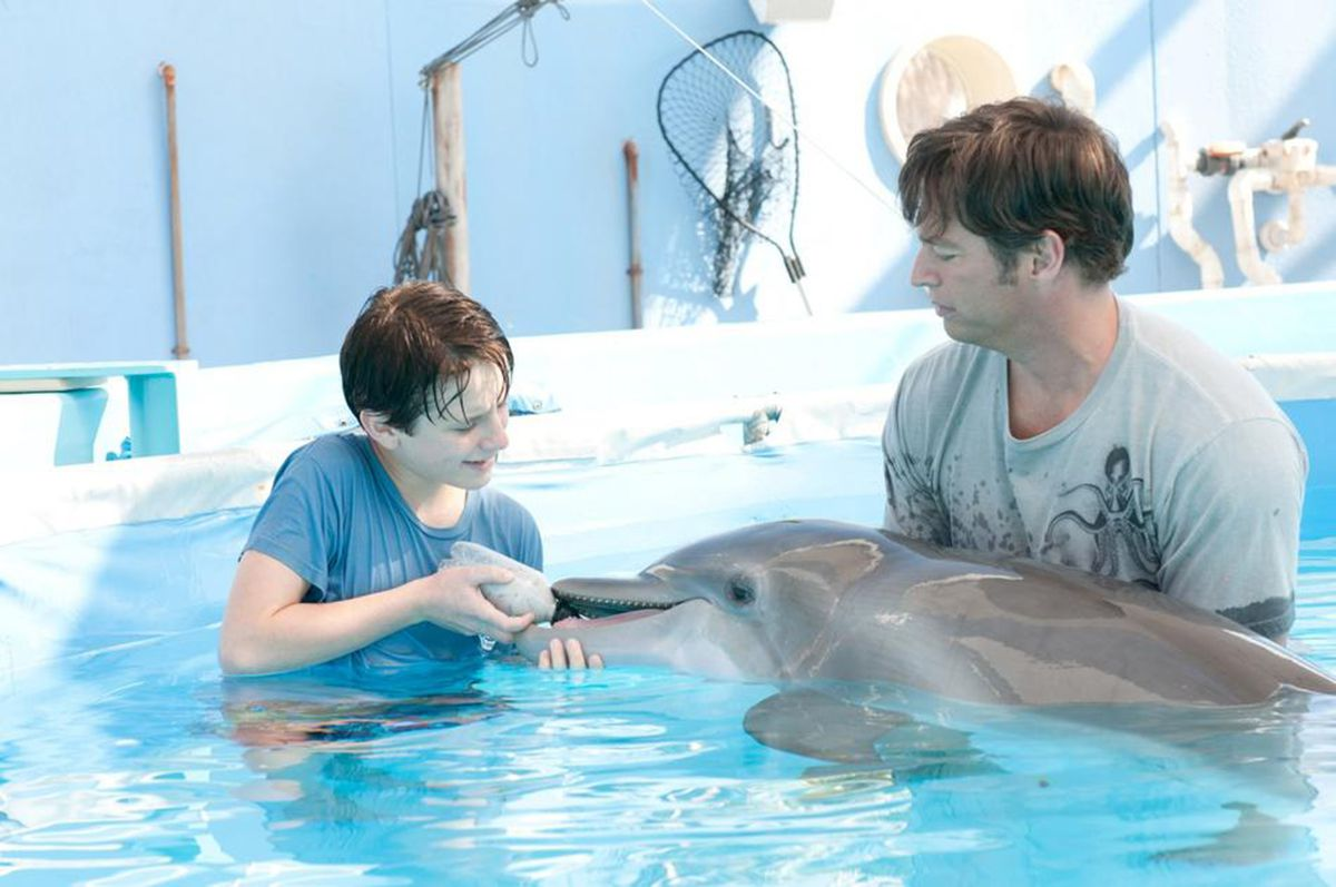 An image from Dolphin Tale