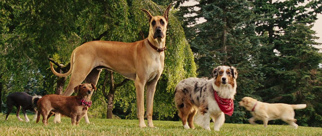 An image from Marmaduke
