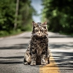 Pet Sematary Remake, Starring Jason Clarke and Amy Seimetz, Gets Trailer