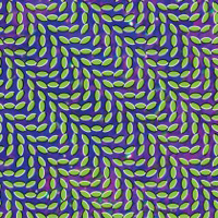 Publicity still for Animal Collective: Merriweather Post Pavilion