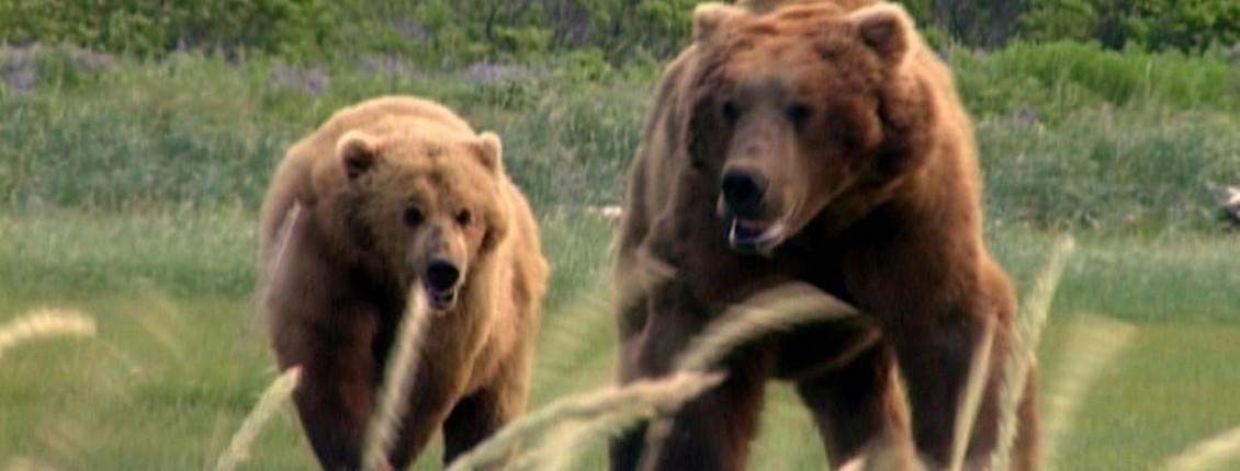 Grizzly Man   Film Review   Slant Magazine