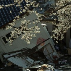 DOC NYC 2011: <em>The Tsunami and the Cherry Blossom</em> and <em>Minka</em>