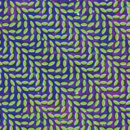 Animal Collective Merriweather Post Pavilion