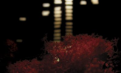 Death Cab for Cutie, Plans