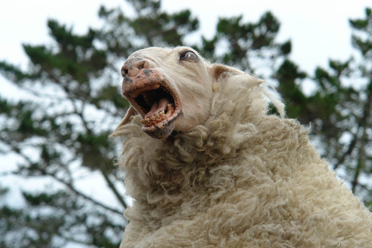 Baa, Baad (or Good?) Black Sheep
