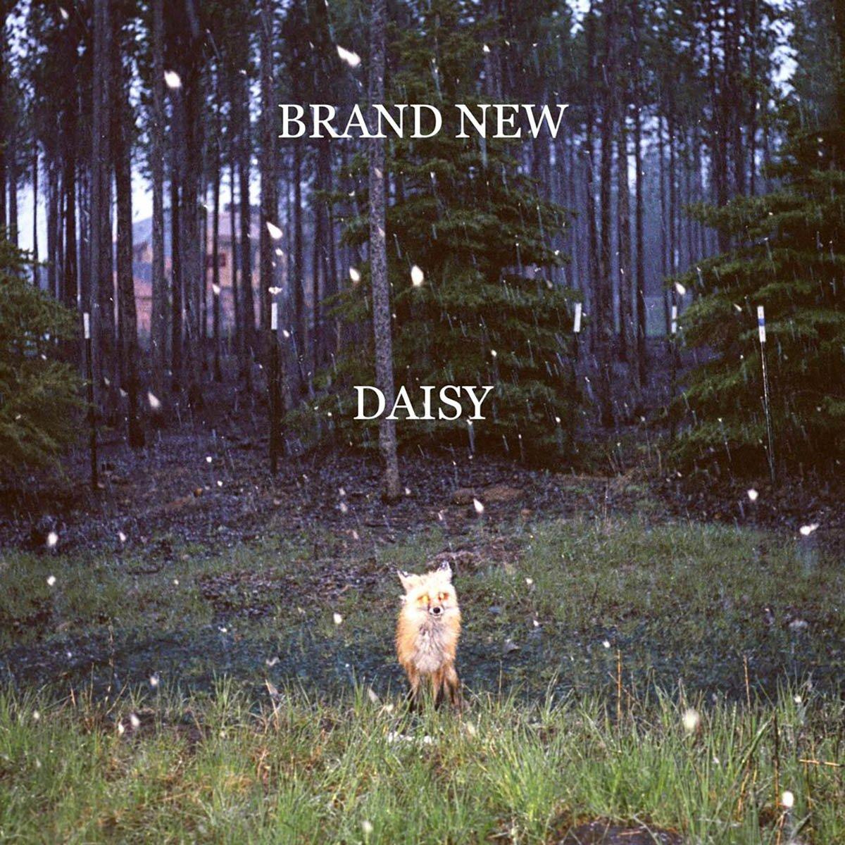 Brand New, Daisy