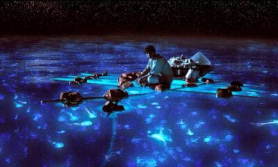 Oscar 2013 Winner Predictions: Cinematography