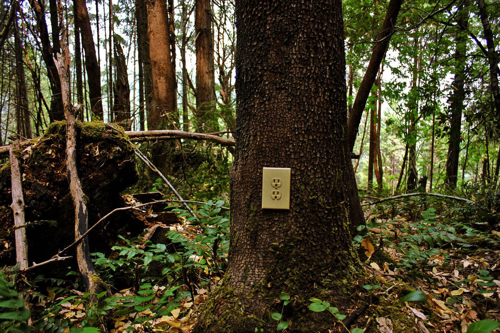 Review The Woods Slant Magazine