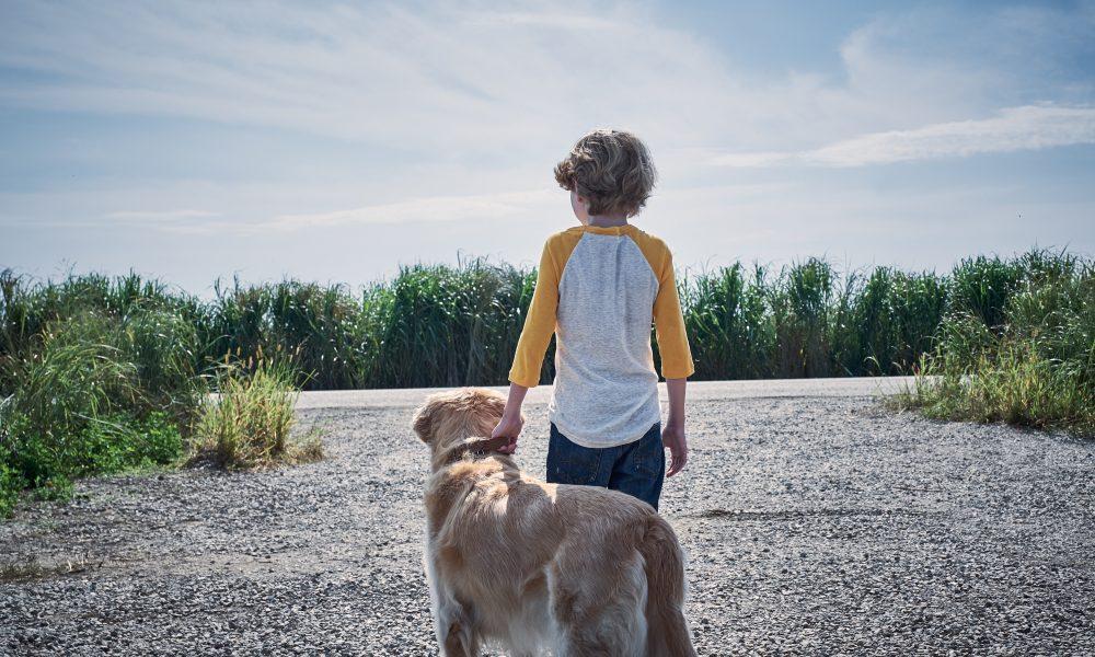 ผลการค้นหารูปภาพสำหรับ in the tall grass film scenes kid